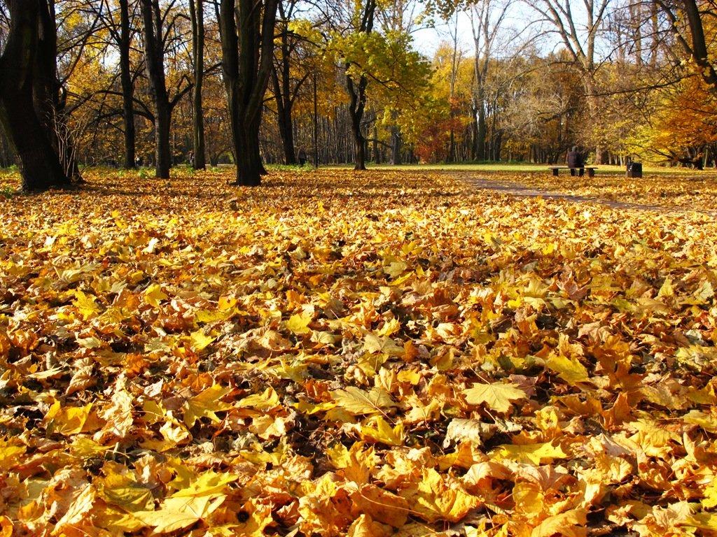 automne2010unparcvarsovie.jpg