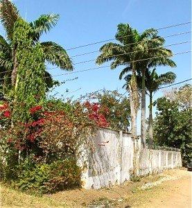 Palmiers à Kaduna