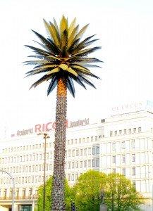 Un seul palmier dans la ville : Varsovie. dans Le genre de mes Photos warsaw9C-217x300