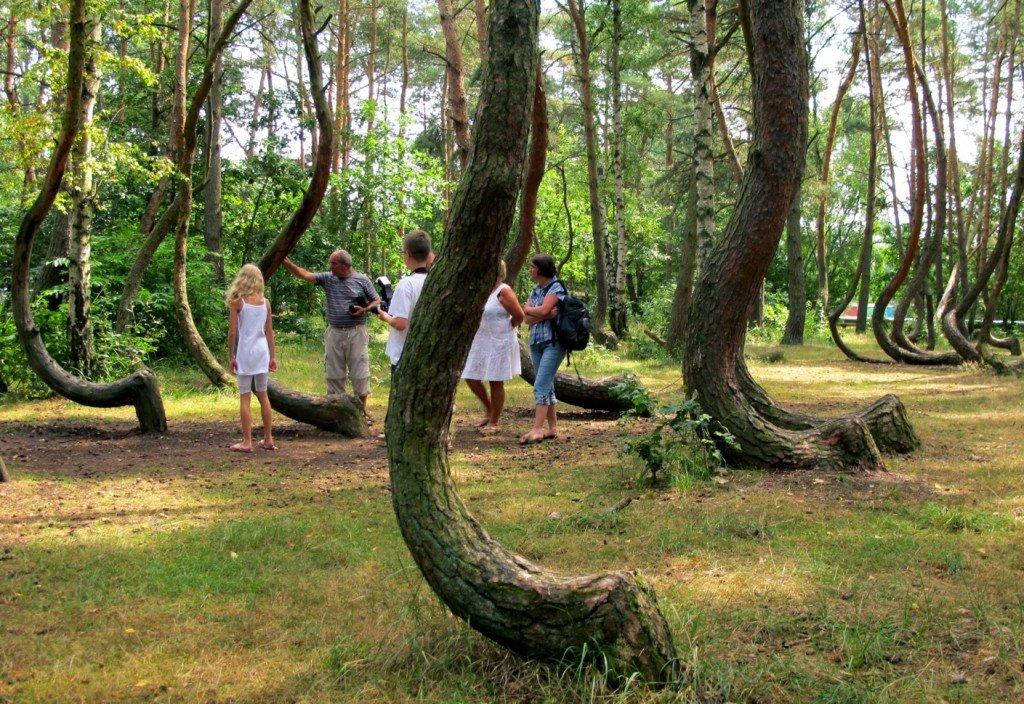 arbre-tordu-5 Gryfino dans Le genre de mes Photos