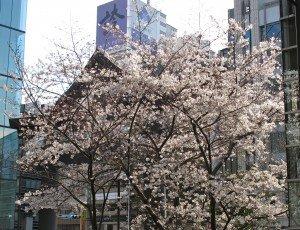 Japon printemps B