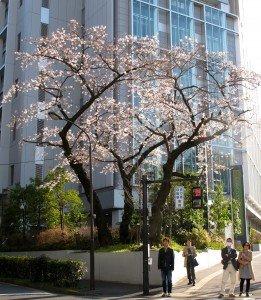 Japon printemps F