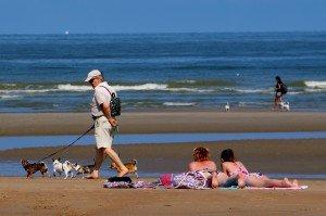 Belgique - plage - chien 1