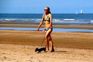 Belgique - plage - chien 2
