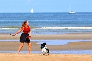 Belgique - plage - chien 3