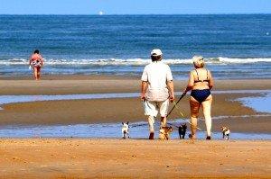Belgique - plage - chien 4