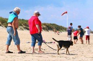 Belgique - plage - chien 5