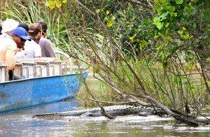 Bateau devant nous et alligator