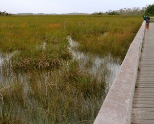 Everglades boardwalk prairie