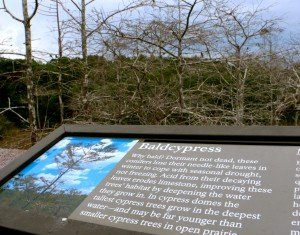 Everglades info board cypres