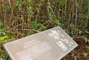 Everglades info board poison wood