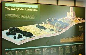 Everglades panneau landscape